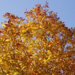 Autumn Colors on Bella Vita Farm