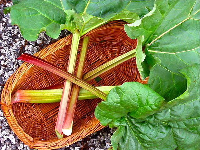 thumb_picked rhubarb_1024