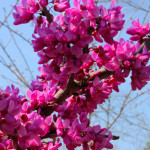 Blossoms Abound Finally!