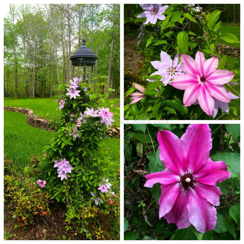 garden bloomfest