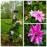 Spring Flower Garden Bloomfest